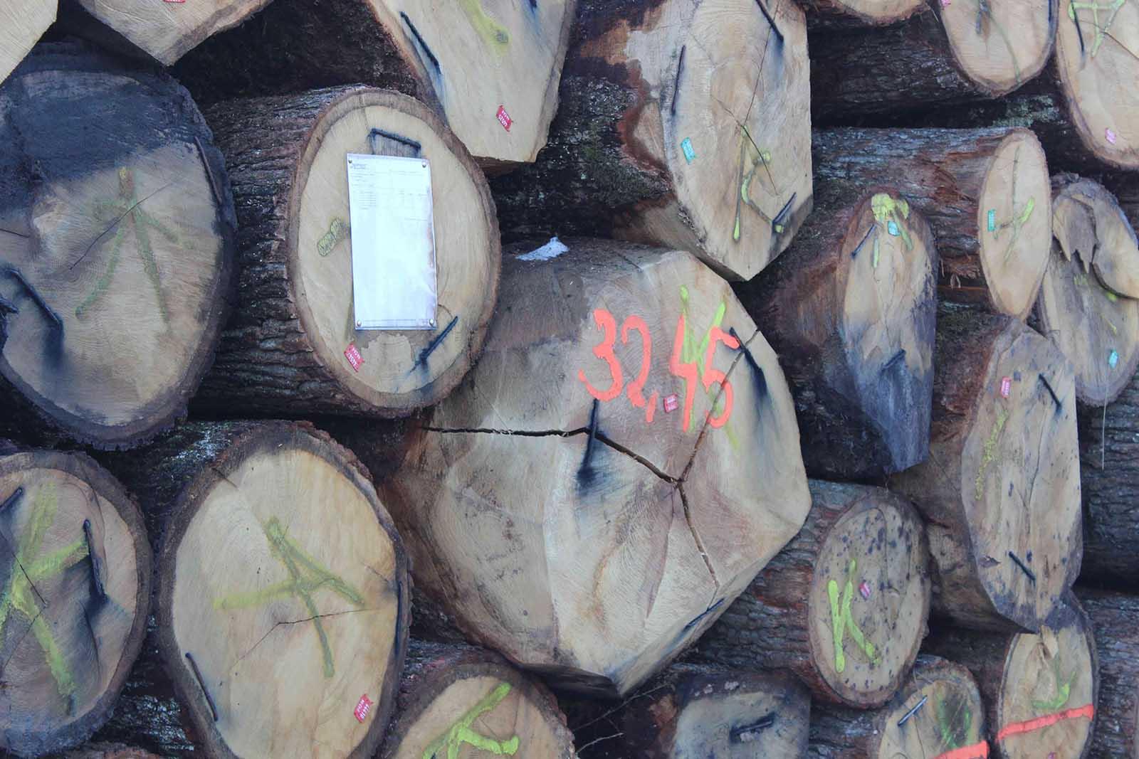 Hrvatsko drvo trupca