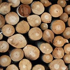 Hrvatsko drvo - ogrievno drvo