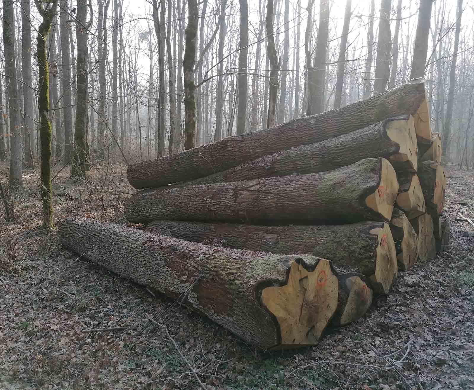 Hrvatsko drvo
